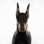K9 Unit – Guard Dogs